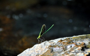 strange dragon fly
